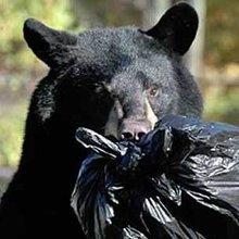 220x220black-bear-trash